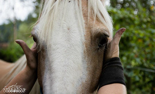 A horses head, gently cupped by human hands